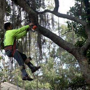 Tree Service Valrico | JW Tree Service